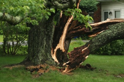 tree-trunk-with-damage_med